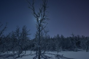 frost at midnight elitere