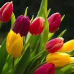 Flower or Flour