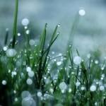 Plouă…